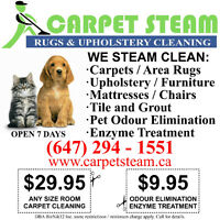 Carpet and Upholstery Cleaner- Steam Cleaning