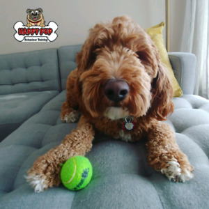 Private family In home dog training! $225 evenings/weekends