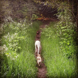 Trails and Tails - Dog Walking and Pet Care Services
