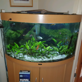 Fish tank with tropical freshwater fish