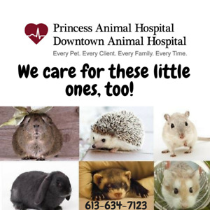 Caring for Bunnies & Small Mammals, too!