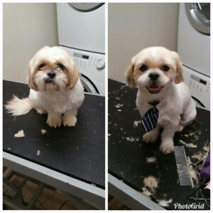 Affordable Dog Grooming Services