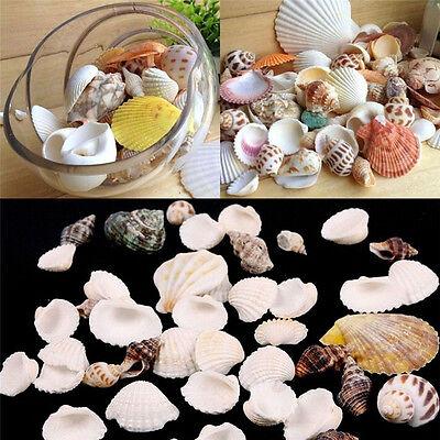 (1 Packet 100g Beach Mixed Sea Shells Mix SeaShells Craft Shells Aquarium Decor)