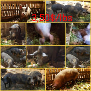 Porc pour méchoui