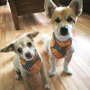 Looking for reasonable dog care from August 26th to October 13th
