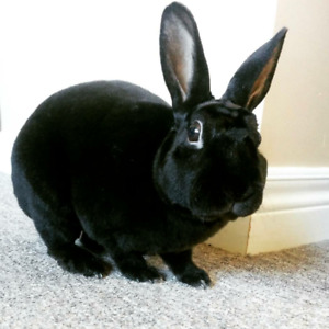 Rabbit to a loving home