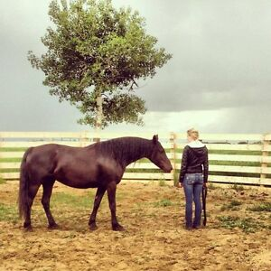 Horse training - Starting, Miles, Conditioning