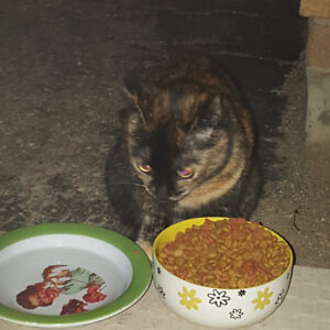 FOUND Tortoise shell cat Conestoga Mall Colonial Acres