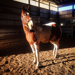 Horse for part lease