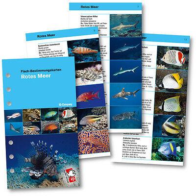 IQ Logbuch Einlagen Fische Rotes Meer SSI Lochung für M Logbuch - NEU !!!