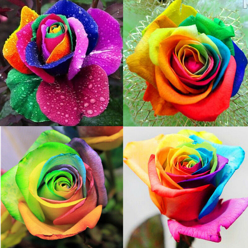wholesale 200pcs colorful rainbow rose valentine lover