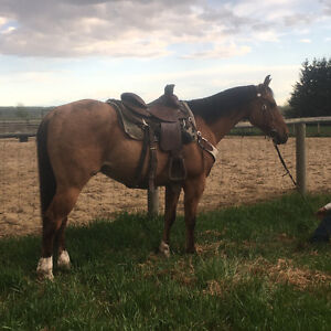 5 Year Old Solid Ranch Gelding