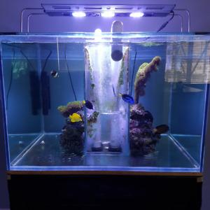 -= Selling Custom Cube Aquarium 172G with stand, sump etc.. =-