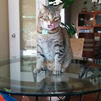 gardienne d'animaux chez vous cat exotic pet care at your home