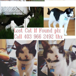 HELP Lost black and white cat in Tuscany, Calgary area