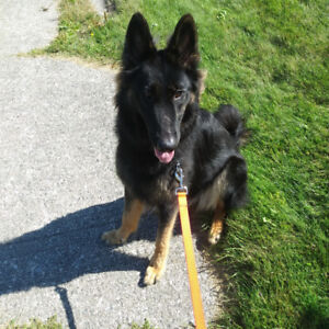 Looking for someone to transport our crated German Shepherd Ont