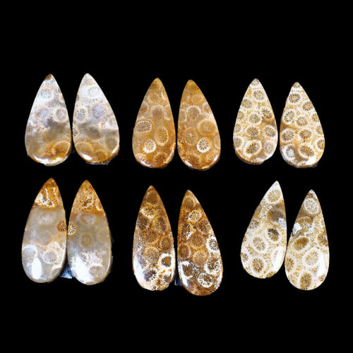 12 Pcs/6 Pairs Natural Fossil Coral Magnificent Gemstones for Making Earrings