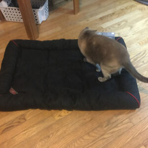 Kong  Dog Bed ,for Large breed dog