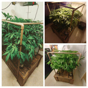 Grow Cannabis Today - Hydroponics and cannabis consultations YEG