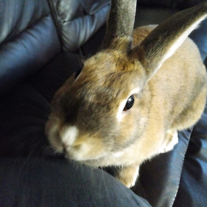 Board your pets while on vacation