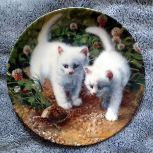 """American White Shorthairs"" Collector Plate"