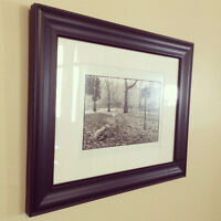 Cheeky Westie Framed Photograph