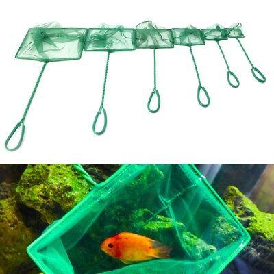 1PC Aquarium Fish Tank Square Shrimp 3