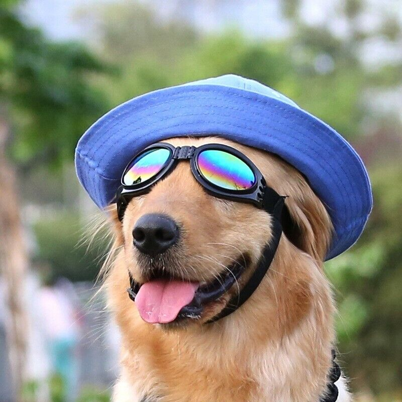 Dog Sunglasses / Goggles - for Large dogs