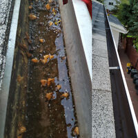 *** Superior Eavestrough Cleaning***
