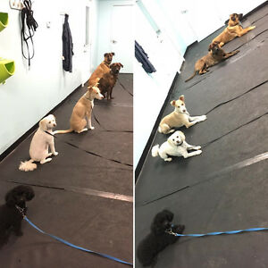 Canine Basic Obedience Class