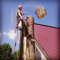 St. Lawrence Tree Service   (FULLY INSURED)