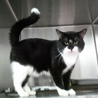 All Black and Black & White Cats Deserve Loving Homes Too
