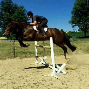 Athletic 18.1 TB/Clyde gelding
