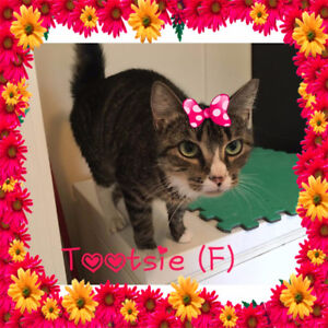 Tootsie needs a home to roll in!