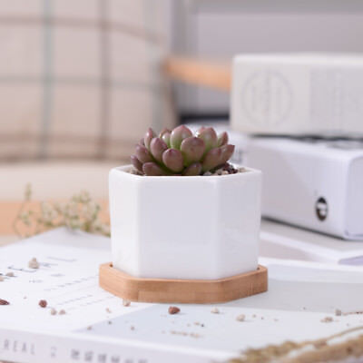 Ceramic Succulent Plant Pot/Cactus Pot With Bamboo Tray White Modern Design for sale  Shipping to Canada