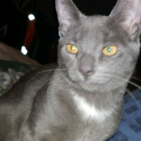 Lost cat my cat Jack. Have you seen him in the Windsor On area?