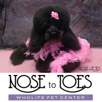 New Dog or Puppy? 10% off 1st Dog Grooming @ Nose to Toes