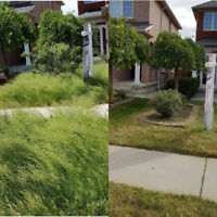 Just Call/Text 6474531506 for Quick Clean Lawn Cutting from $49!