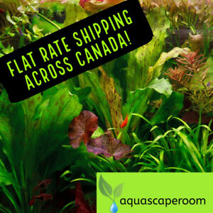 Order Live Aquarium Plants, Hardscape and More 15% Off SALE!