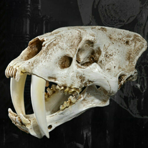 Saber-Toothed Tiger Resin Skull Replica Head Model Home Bar Decor Gifts