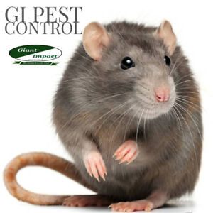 100% PEST REMOVAL CALL 437-928-1194