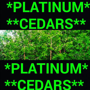 ****CEDAR HEDGES FOR CHEAP PRICES ****