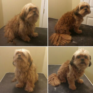 Grooming find or advertise pet animal services in kitchener dog grooming new clients welcome solutioingenieria Gallery