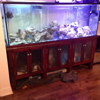 Aquarium/Fish Tank   120 Gallons!!! Salt Water