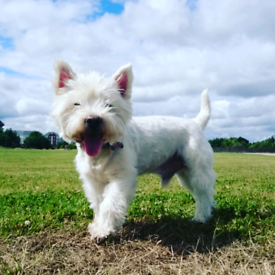 Professional Dog Walking Services Cardiff