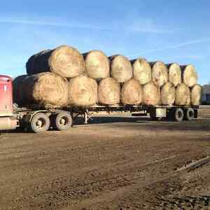 Green Feed (South of Prince Albert)