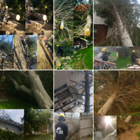 TREE SERVICES -STORM DAMAGE -TREE REMOVAL/PRUNING  647.390.9223