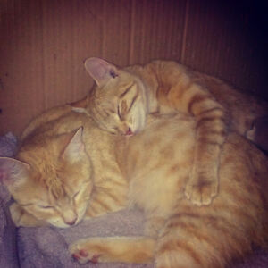 Two rescued young adult females free to a loving home