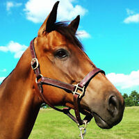 """""""Boat Launcher"""" - 7 y/o, 16hh, Thoroughbred Mare"""