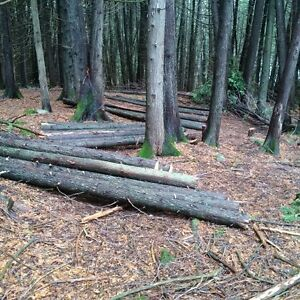Cedar Posts, Rails, Saw Logs and Pickets For Sale